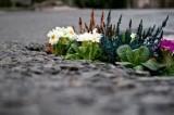 Kwiatki zamiast dziur w drogach