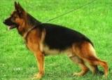 Apel do właścicieli psów