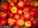 Kolejna transza owoców i warzyw dla mieszkańców Bratkowic