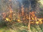 Letnie wypalanie pozostałości roślinnych