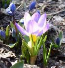 Rozpoczęła się wiosna